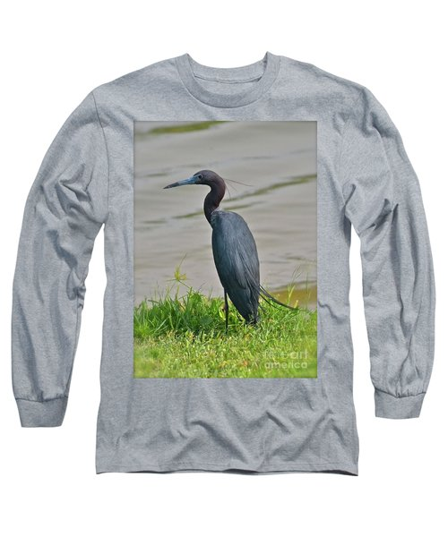 Long Sleeve T-Shirt featuring the photograph Small Blue Heron by Carol  Bradley