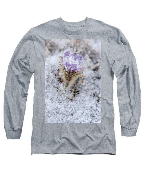 Snowy Pasqueflower Morning Long Sleeve T-Shirt