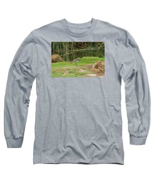 Southern Lapwing On Shore Long Sleeve T-Shirt by Robert Hamm