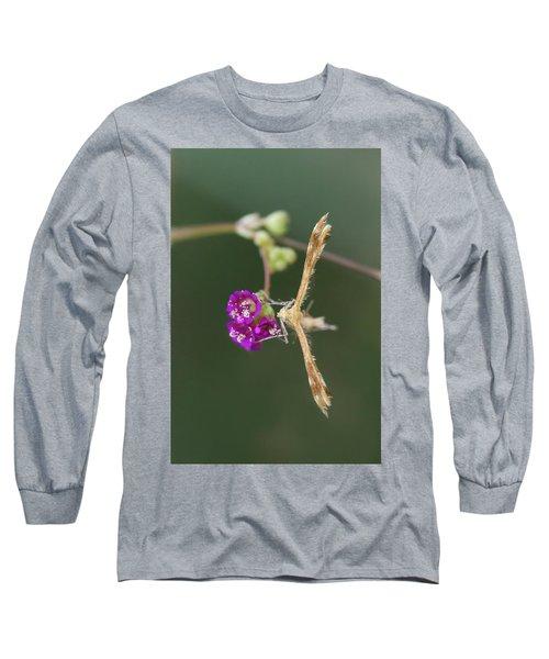 Spiderling Plume Moth On Wineflower Long Sleeve T-Shirt