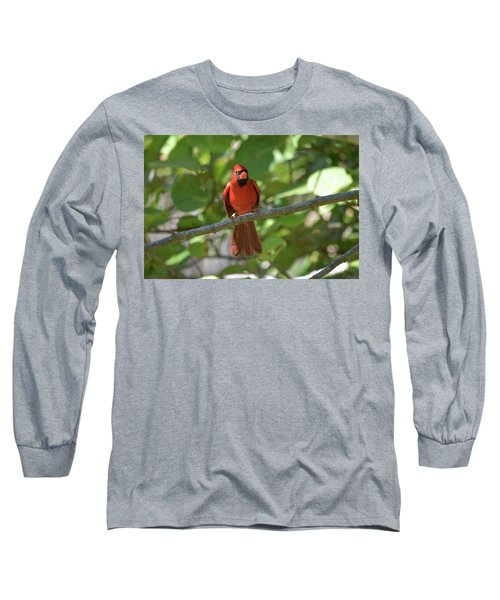 Spring Training Cardinal Long Sleeve T-Shirt