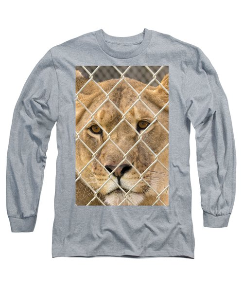 Staring Lioness Long Sleeve T-Shirt