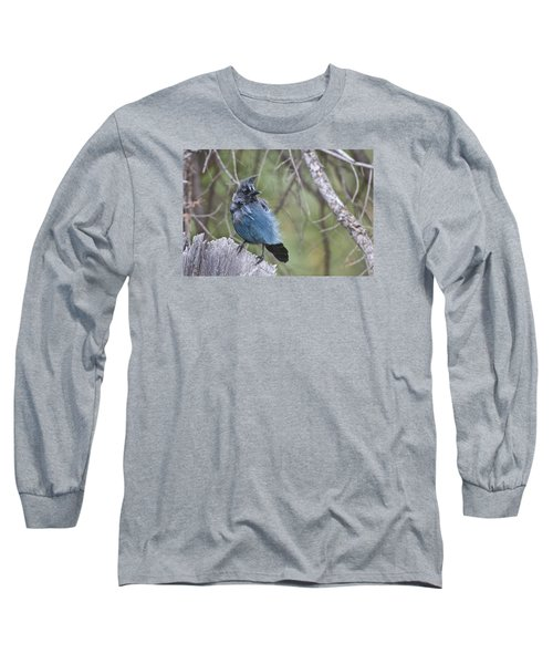 Long Sleeve T-Shirt featuring the photograph Stellar's Jay by Gary Lengyel