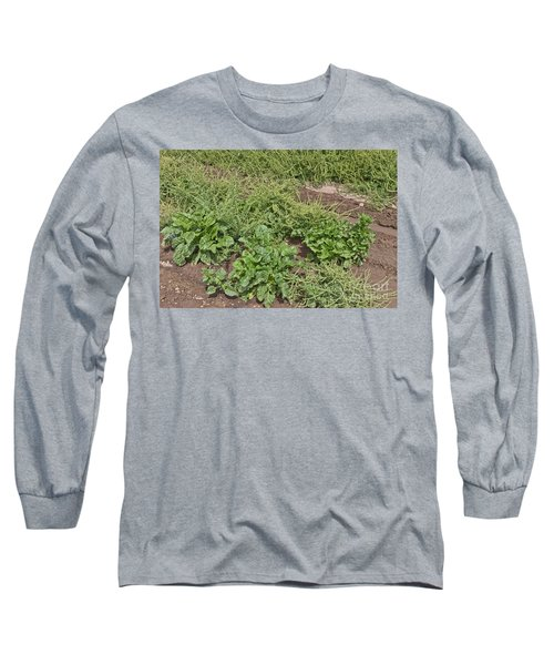 Sugar Beets, Seed Production Long Sleeve T-Shirt