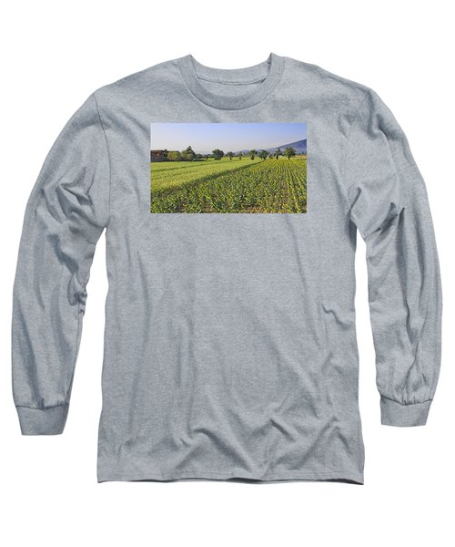 Sunflowers Of Tuscany Long Sleeve T-Shirt by Allan Levin
