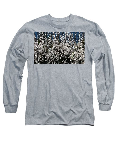 Sunlit Apricot Blossoms Long Sleeve T-Shirt by Will Borden