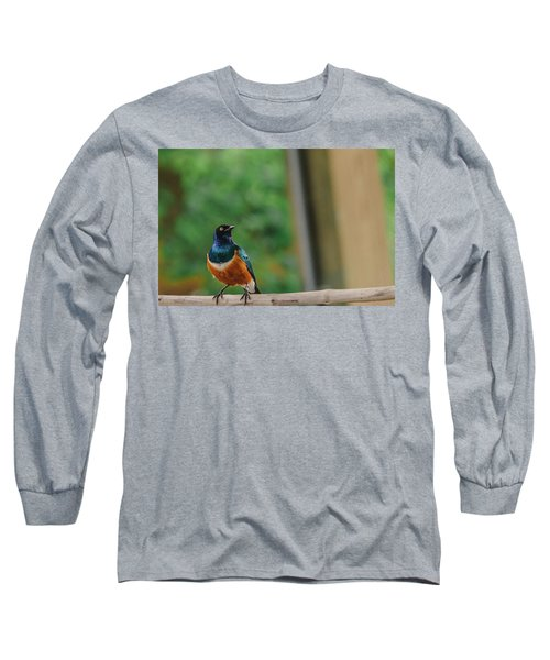 Superb Starling Long Sleeve T-Shirt