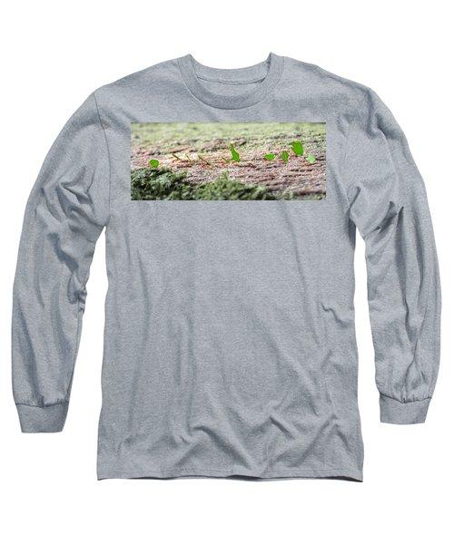 The Leaf Parade  Long Sleeve T-Shirt by Betsy Knapp