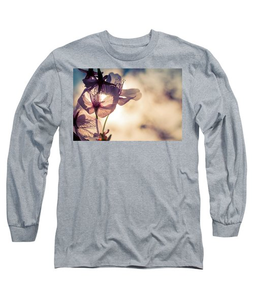 Tree Blossoms Backlit By The Afternoon Sun Long Sleeve T-Shirt