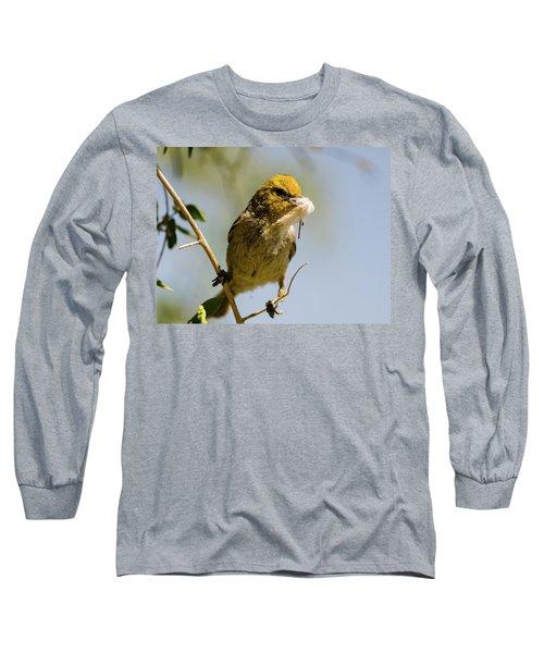 Verdin Building A Nest Long Sleeve T-Shirt