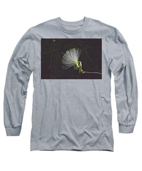 White Shaving Brush Pseudobombax Flower Long Sleeve T-Shirt