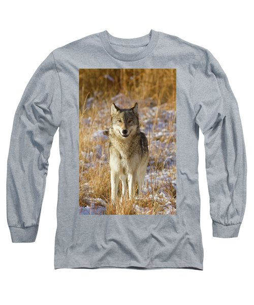 Wild Wolf Portrait Long Sleeve T-Shirt
