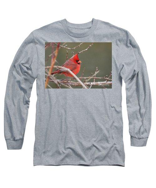 Winter Cardinal Long Sleeve T-Shirt