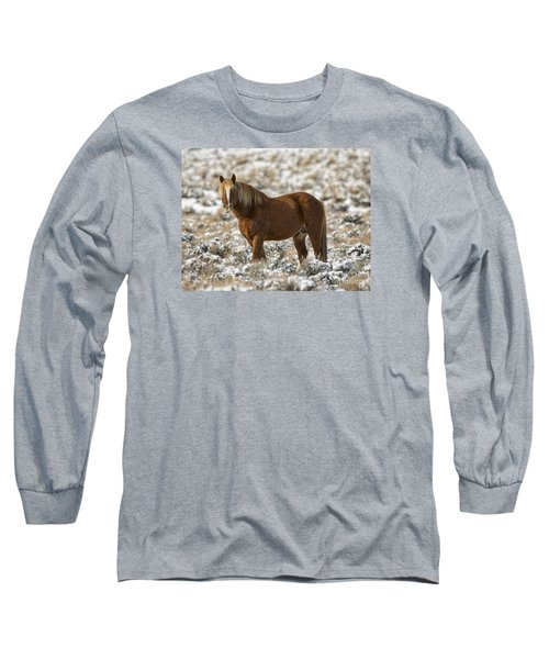 Winter Stallion Long Sleeve T-Shirt by Mitch Shindelbower
