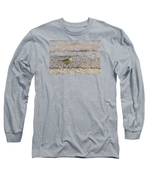 Long Sleeve T-Shirt featuring the photograph Yellow Crowned Wagtail Juvenile by Jivko Nakev
