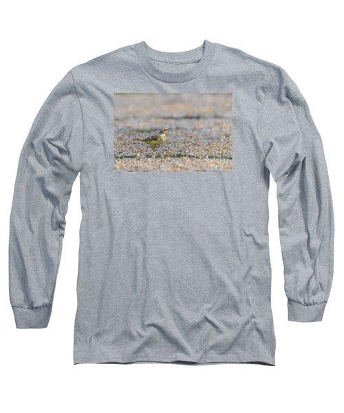 Yellow Crowned Wagtail Juvenile Long Sleeve T-Shirt