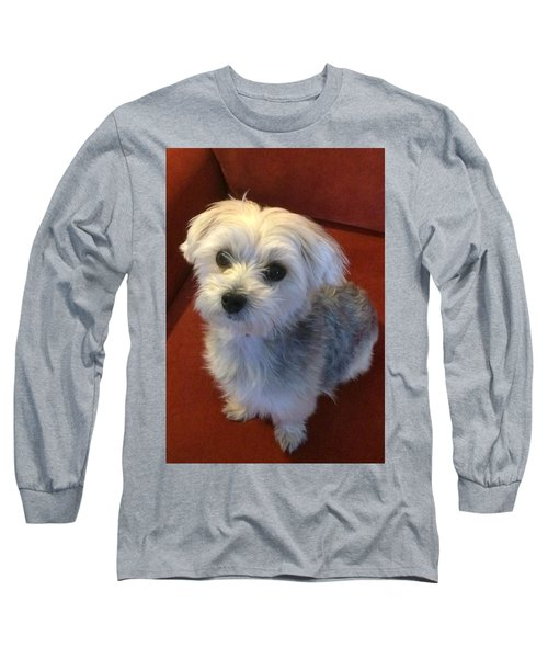 Yorkshire Terrier Long Sleeve T-Shirt by Robin Regan