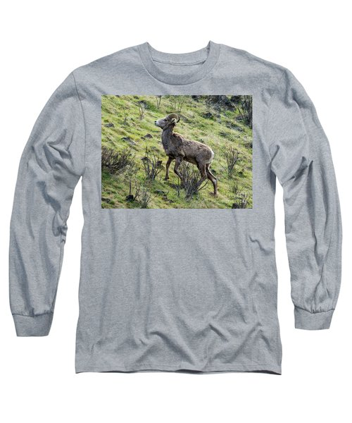 Long Sleeve T-Shirt featuring the photograph Young Ram Climbing by Mike Dawson