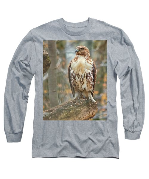 Young Red Tailed Hawk  Long Sleeve T-Shirt