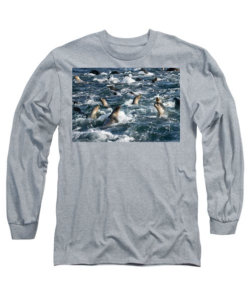 A Raft Of Sea Lions Long Sleeve T-Shirt