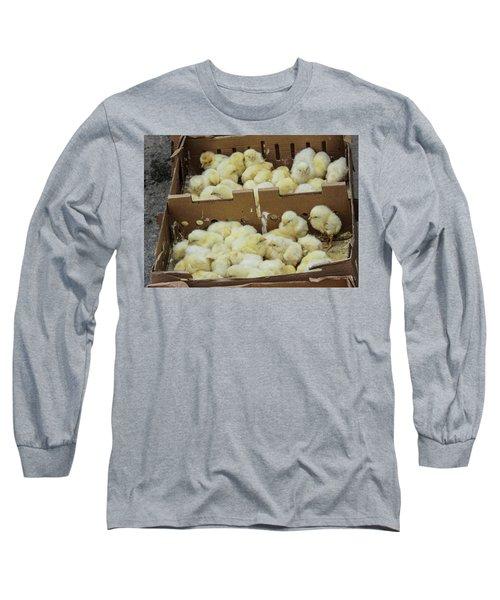 Baby Chicks  Long Sleeve T-Shirt