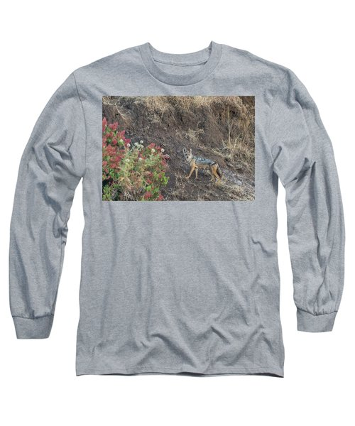 Long Sleeve T-Shirt featuring the photograph Black Backed Jackal by Alex Lapidus