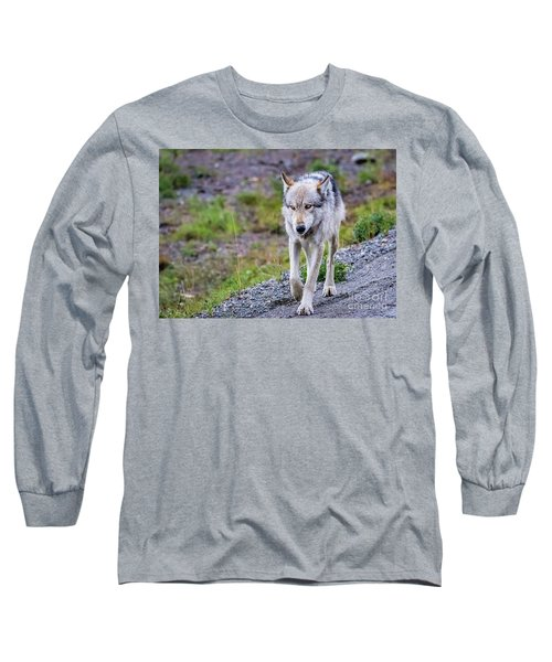 Grey Wolf In Denali National Park, Alaska Long Sleeve T-Shirt