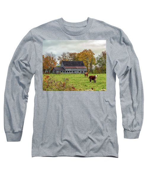 Herefords In Fall Long Sleeve T-Shirt