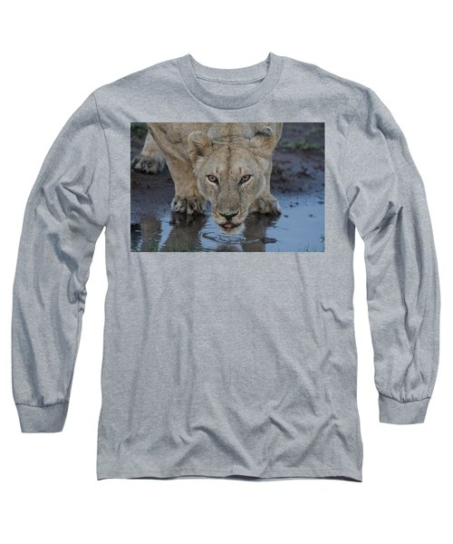 Lioness Drinking Long Sleeve T-Shirt