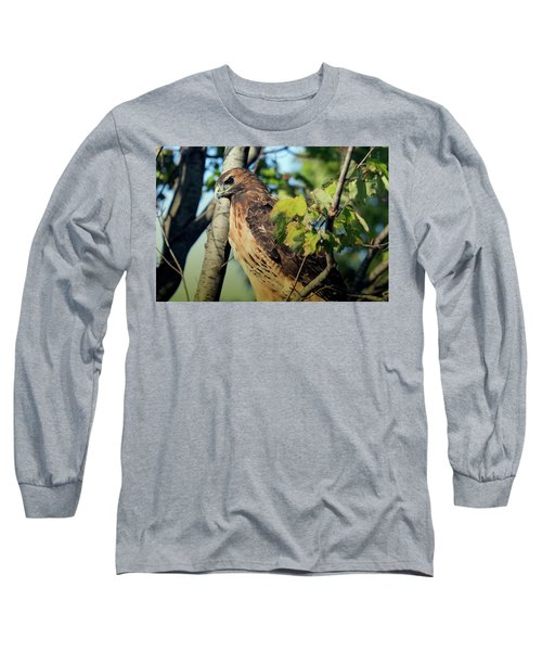 Red-tailed Hawk Looking Down From Tree Long Sleeve T-Shirt