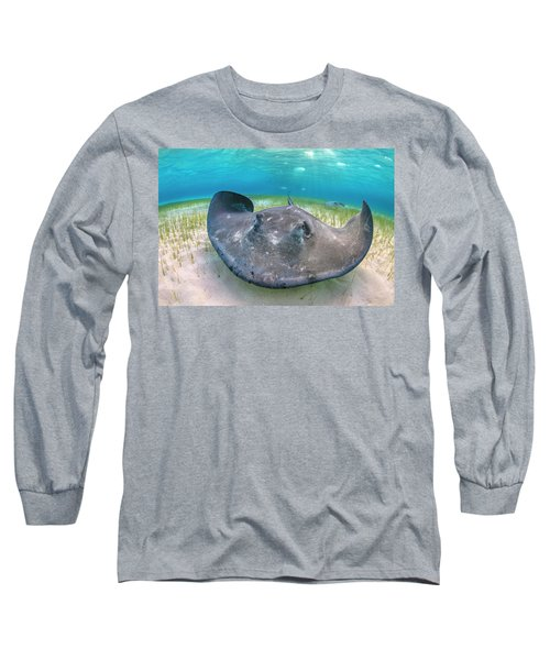 Southern Stingray Female Foraging, Grand Cayman Long Sleeve T-Shirt