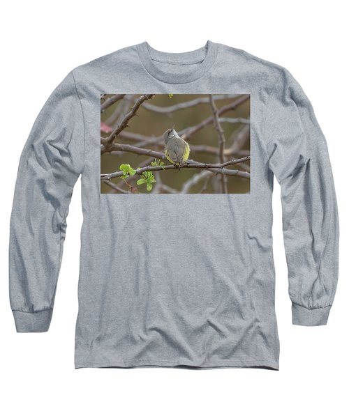 Yellow-bellied Eremomela Long Sleeve T-Shirt
