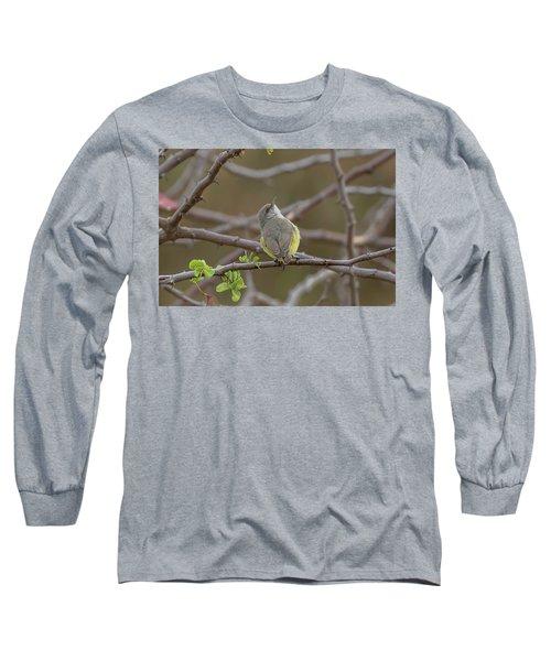 Yellow-bellied Eremomela Long Sleeve T-Shirt