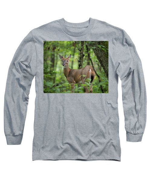 Young White-tailed Deer, Odocoileus Virginianus, With Velvet Antlers Long Sleeve T-Shirt