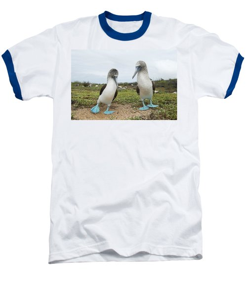 Blue-footed Booby Pair Courting Baseball T-Shirt by Tui De Roy