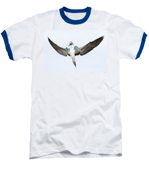 Blue-footed Booby Landing Galapagos Baseball T-Shirt by Tui De Roy