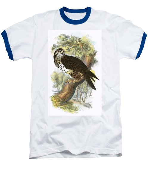 Common Buzzard Baseball T-Shirt by English School