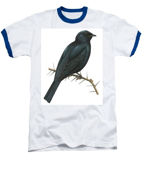 Cuckoo Shrike Baseball T-Shirt by Anonymous
