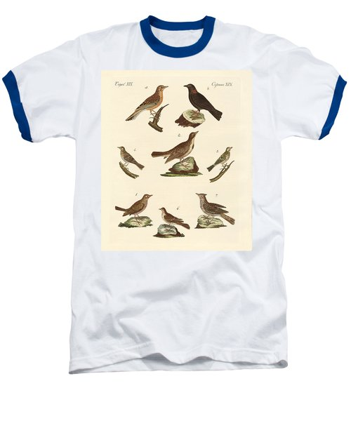 Different Kinds Of Larks Baseball T-Shirt by Splendid Art Prints