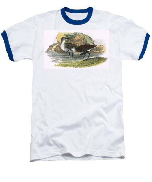 Dunlin Baseball T-Shirt by English School