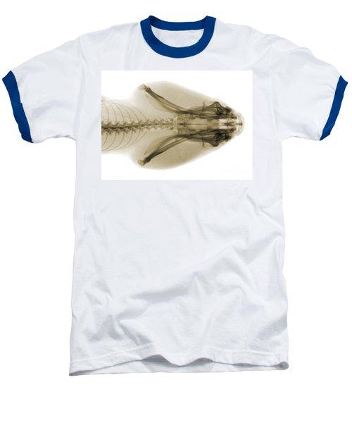 Eastern Diamondback Rattlesnake Head Baseball T-Shirt by Ted Kinsman