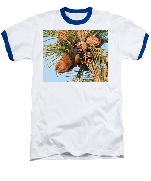Crossbill Baseball T-Shirt by Judd Nathan