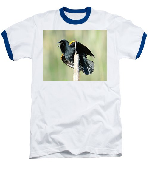 Baseball T-Shirt featuring the photograph Red-winged Blackbird by Jack Moskovita