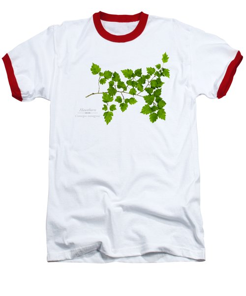 Hawthorn Baseball T-Shirt by Christina Rollo