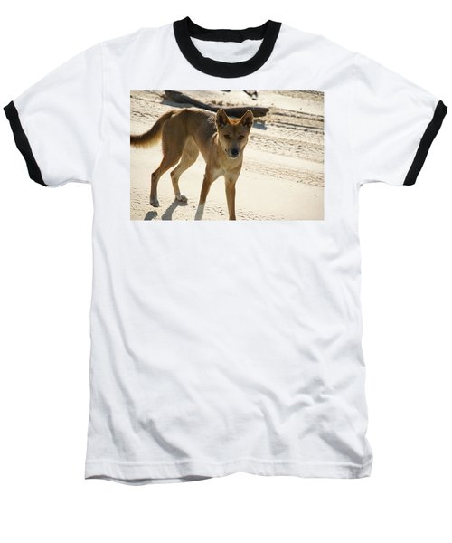 Dingo Baseball T-Shirt by Carol Ailles
