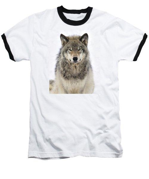 Timber Wolf Portrait Baseball T-Shirt by Tony Beck