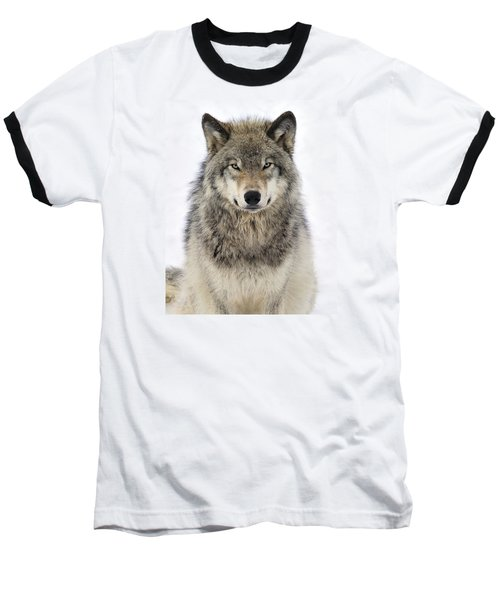 Timber Wolf Portrait Baseball T-Shirt