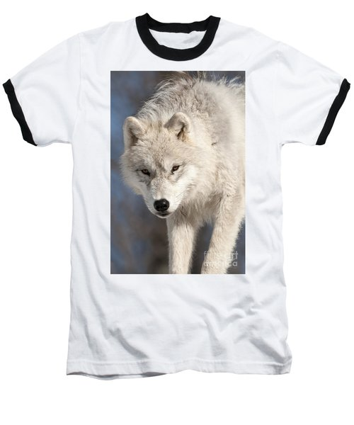 Arctic Wolf Pup Baseball T-Shirt
