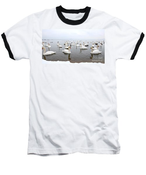 60 Swans A Swimming Baseball T-Shirt