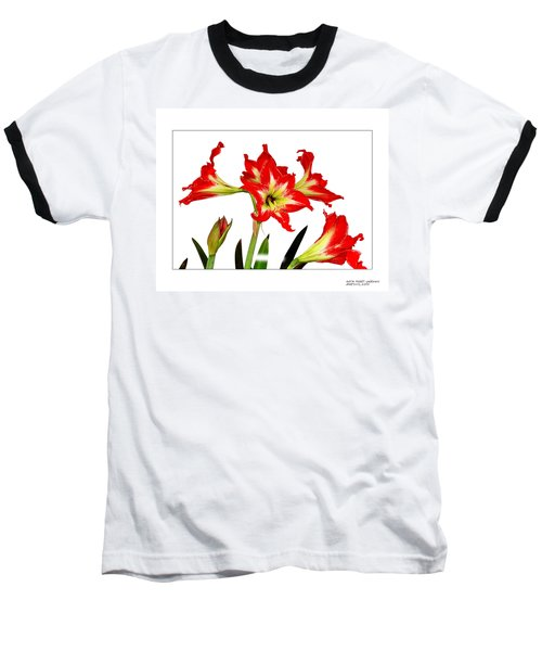 Baseball T-Shirt featuring the photograph Amaryllis On White by David Perry Lawrence